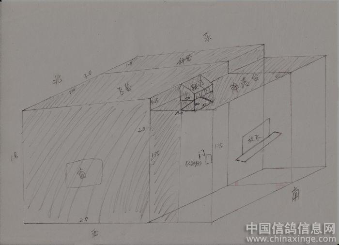 鸽子素描的画法步骤图