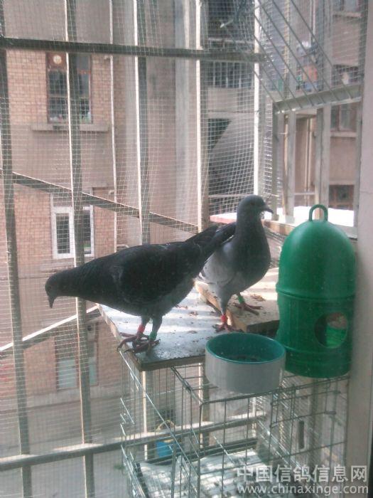 窗户外面的袖珍 小鸽棚图片