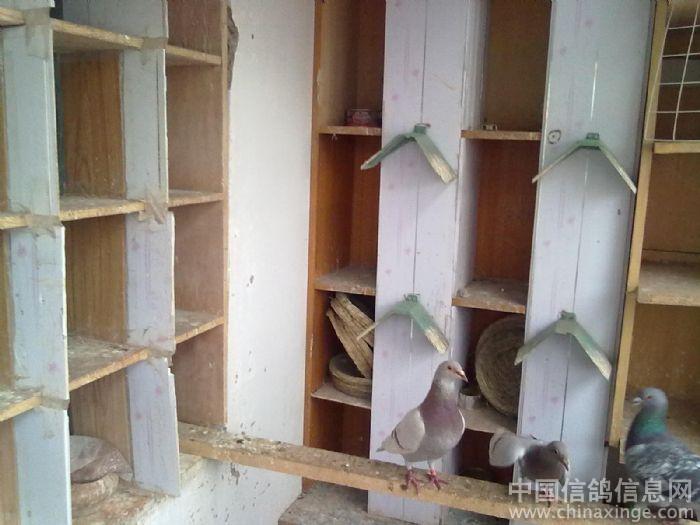 自己设计的经典小鸽舍; 新凉台标准鸽舍; 木制小鸽舍设计图;