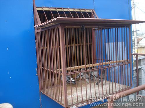 新建的赛鸽棚