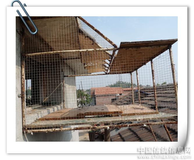 信鸽鸽舍跳笼设计图图片