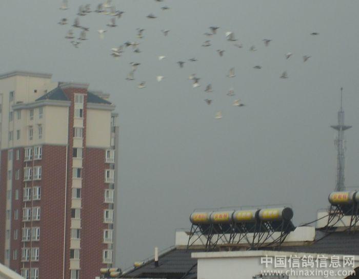 信鸽鸽舍苍白系--中国复式信息网新旧相册商品房设计图图片