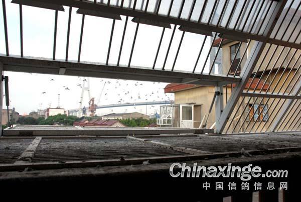 冯志杰先生中国鸽舍--浦东信鸽信息网相册3d哪些鞋子有设计软件图片