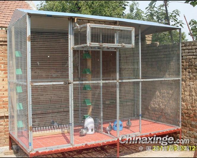 新建的可装可拆鸽舍;--中国信鸽信息网视频微相册工作室青图片