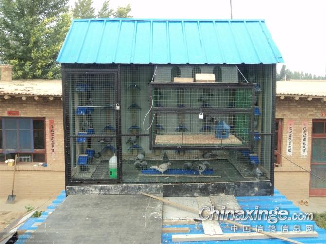 我的鸽舍--中国视频信息网信鸽歌相册和之图片