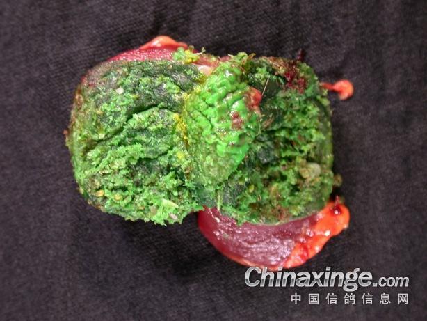 蛙脑部结构图及功能