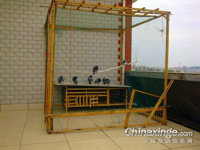 设计随意--中国信鸽信息网小结相册生活课程作业机械图片