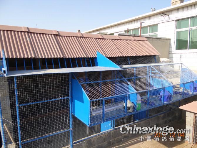 简单的鸽棚建设计图,台湾赛鸽棚设计图,农村鸽棚设计图