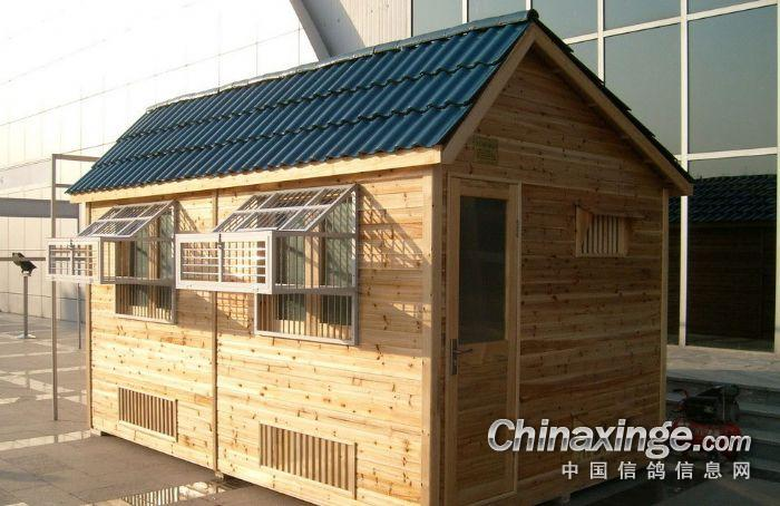 常见的饲养鸽子的方法 搭建鸽舍的视频