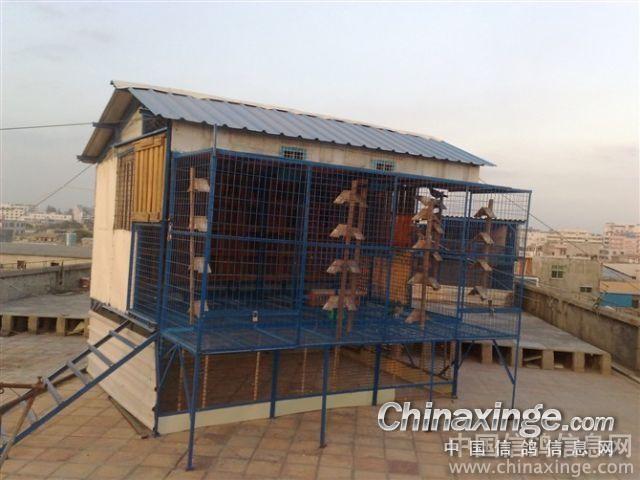 信鸽鸽舍图片图片大全 新鸽舍图片 中国信鸽信息网相
