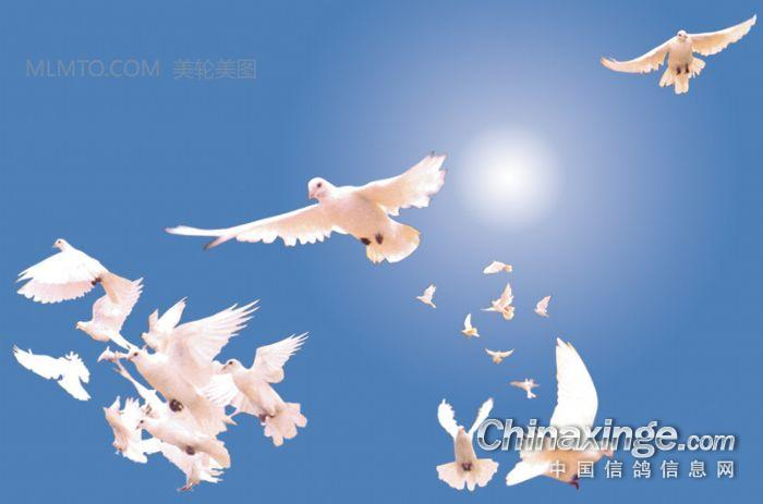 那一天歌谱 一群白鸽