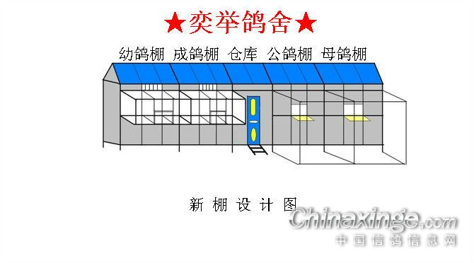 台湾赛鸽鸽棚设计图片展示