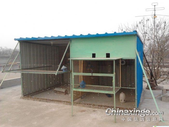 90后农村鸽舍.--中国信鸽信息 -农村简陋鸽棚图片 不花钱做鸽棚图图片