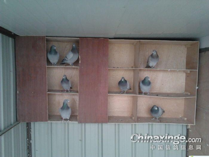 农村老木柜子图片