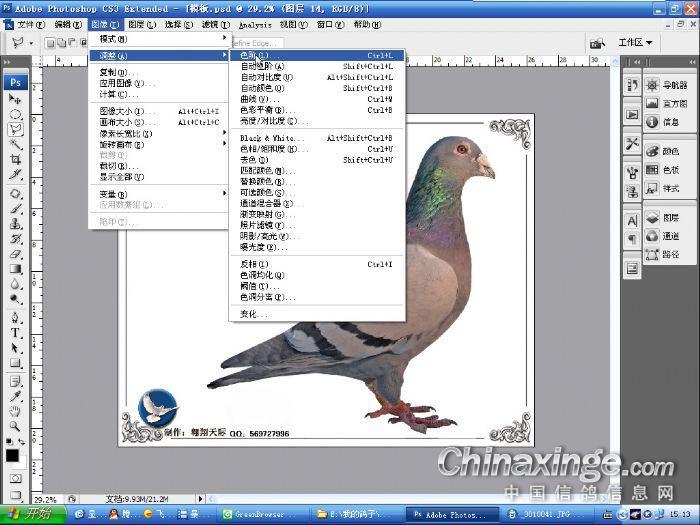 信鸽图片制作流程