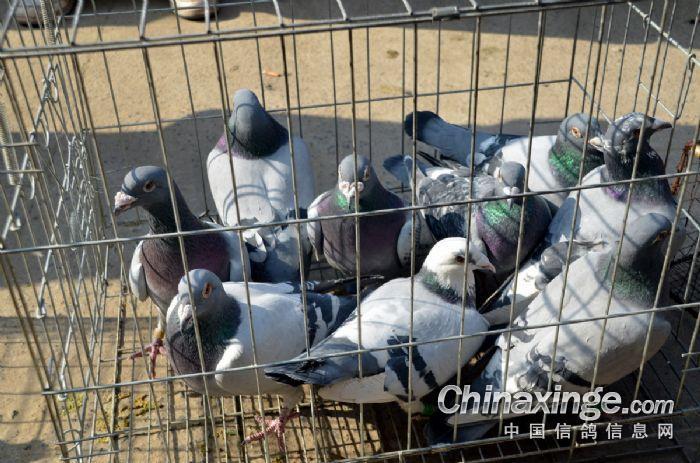 郑州动物保护协会