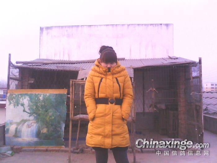 视频鸽舍韩农村春明图片