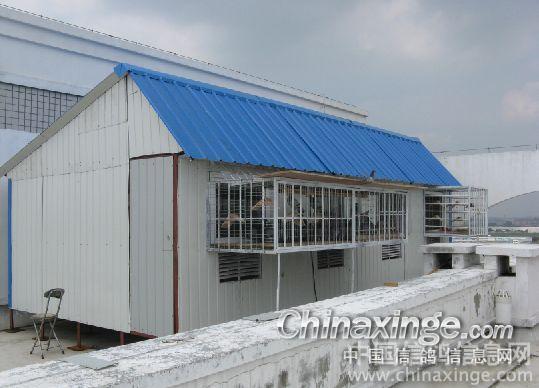 屋顶鸽子棚设计图片