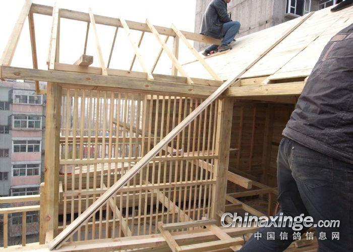 制作:速珑鸽舍设计制作; 纯木质鸽舍建造--中国信鸽信息网相册; 楼顶