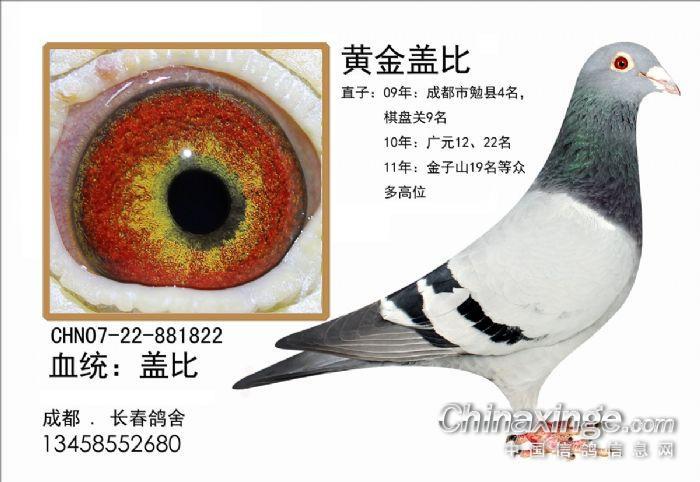 我也很喜欢白鸽子,但你的比我的好看的多 -鸽子图片