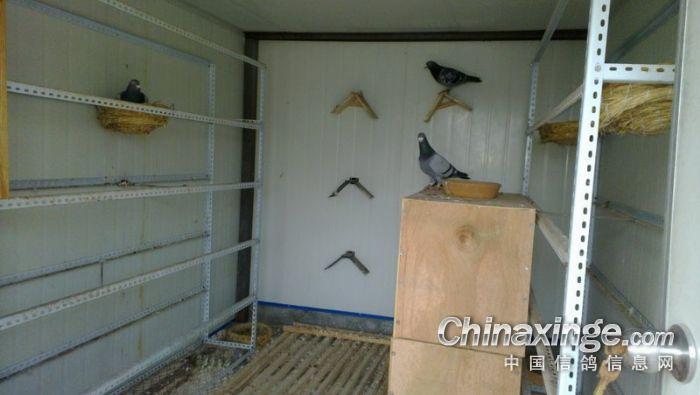 小型鸽棚设计大全图