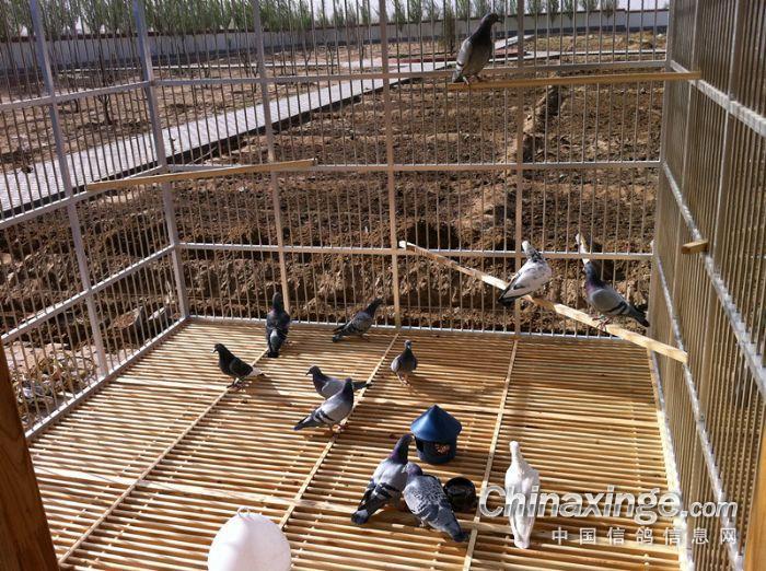 制作鸽子笼设计图展示