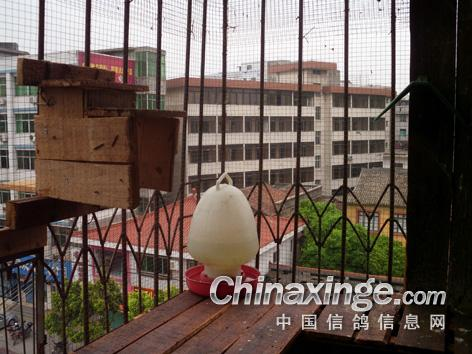 阳台小鸽舍图片
