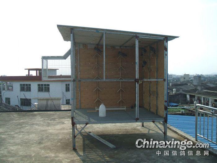 信鸽鸽舍建造装秀-新建赛鸽棚  把跳笼装上,栖架也一起装上.