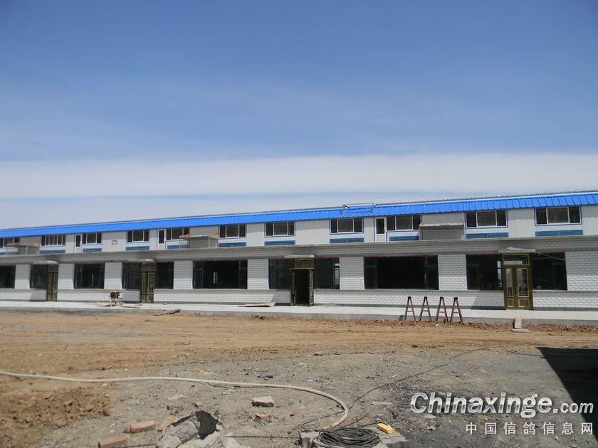 同时拜访了台湾长城兄弟国际鸽舍 个人认为(锦州青平鸽舍)建造得