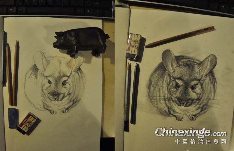 龙猫素描铅笔画步骤