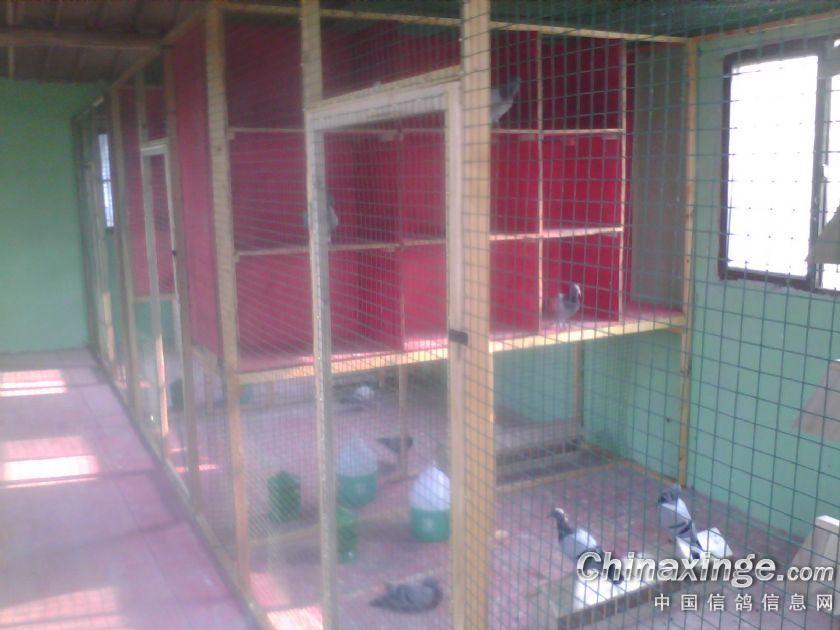 看看鸽舍内部吧,木质框架,总空间为2m×2m×8m,分成了三间,8个窗户