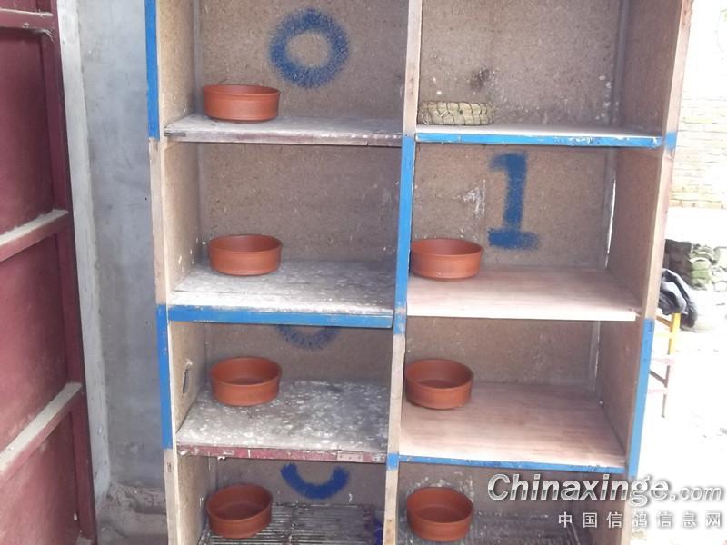 中国 鸽舍/邻居给的衣柜改造的巢箱。。。...