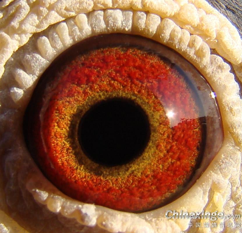 眼环的结构图