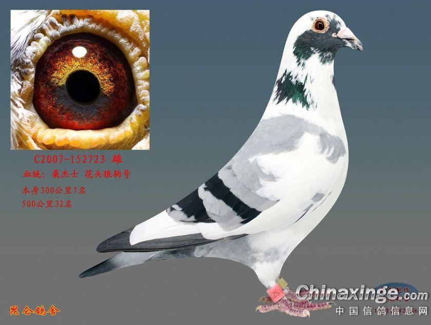 _杨阿腾信鸽眼砂配对_杨阿腾信鸽鸽眼配对 - 图片 -亚青会安保服装,