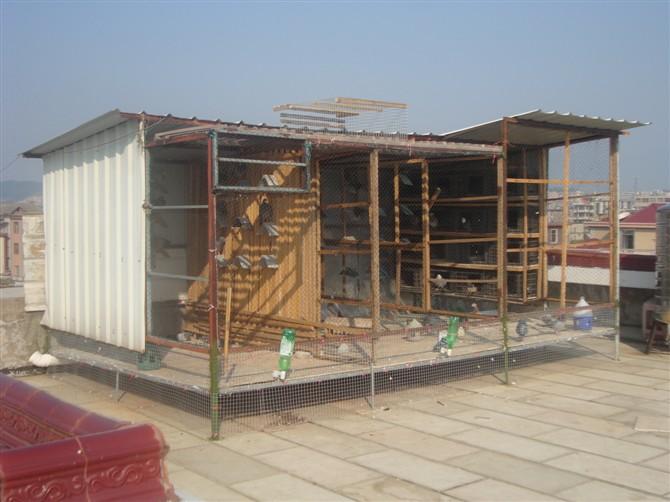 鸽子棚---中国信鸽信息网相册图片