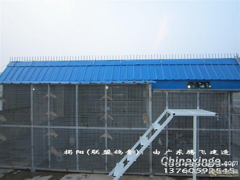 中国 广东 揭阳/揭阳联盟鸽舍,广东腾飞建造//中国信鸽信息网