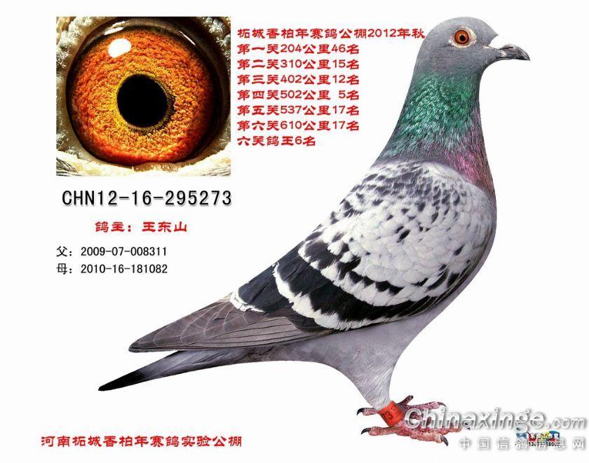 信鸽棚的各种设计图片