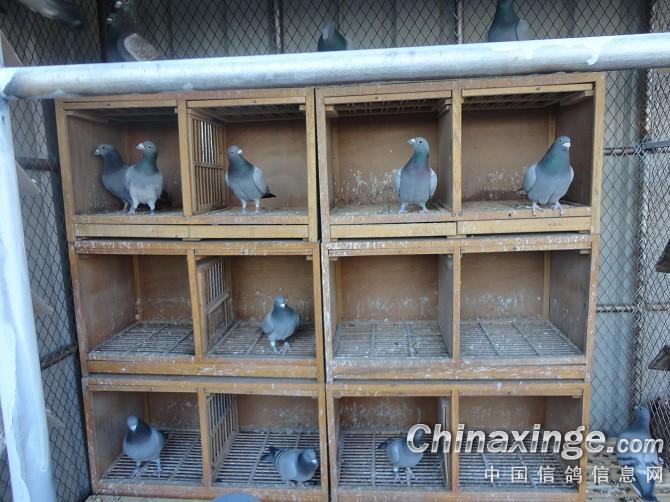 信鸽欧式进口安装图片