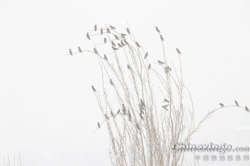 树鸟风景的简笔画图片大全
