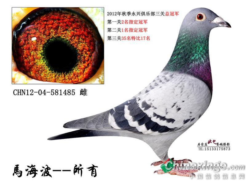 赛鸽人生--中国信鸽信息网相册