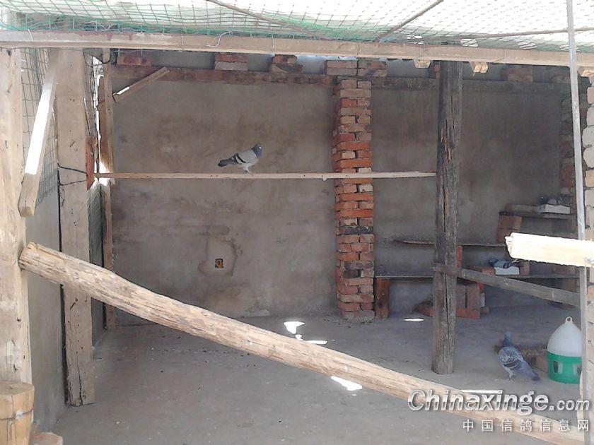 自己动手搭建的简易鸽棚--中国信鸽信息网相册