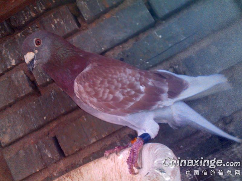 美女鸽友手上的蛋好漂亮啊