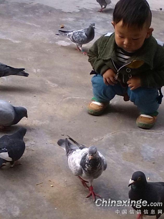 儿子喂鸽子