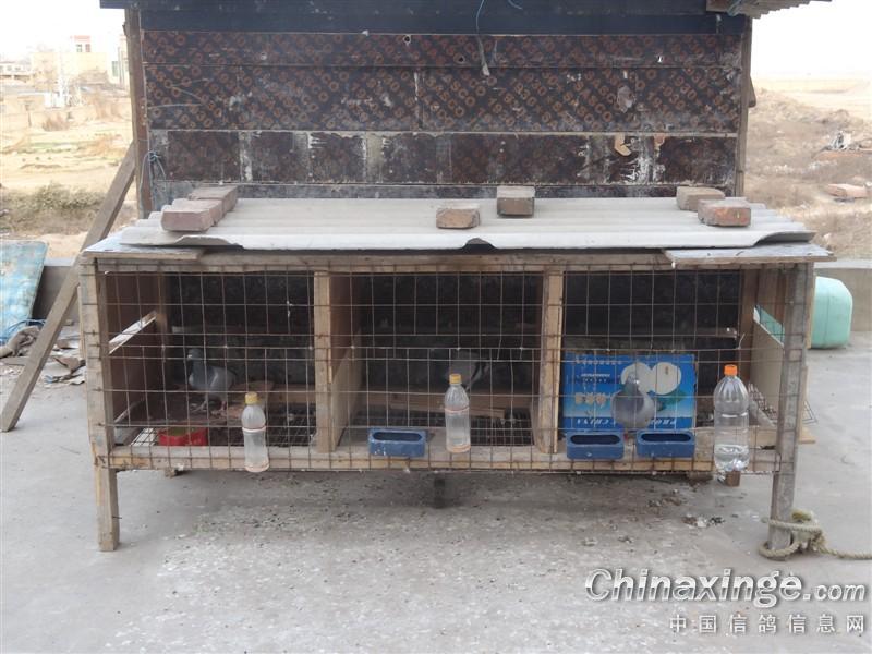 鴿棚搭建圖 鴿子棚搭建 狗棚搭建設計圖