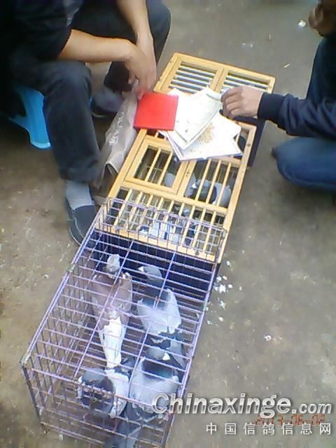 贵阳 贵钢花鸟市场 中国 信鸽 信息网 相册 高清图片