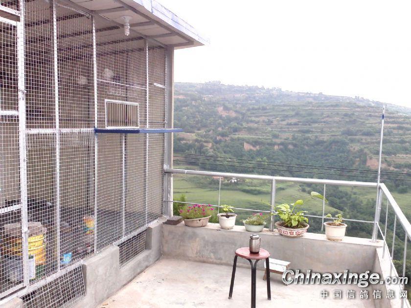 鸽棚阳台设计图-阳台种菜设备