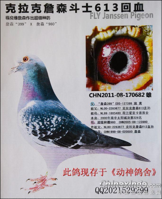 信鸽鸽舍建造图片图图片展示下载; 作出: 邓文敏;
