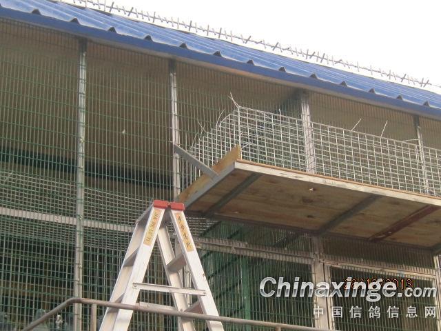 新的赛鸽棚建设完工