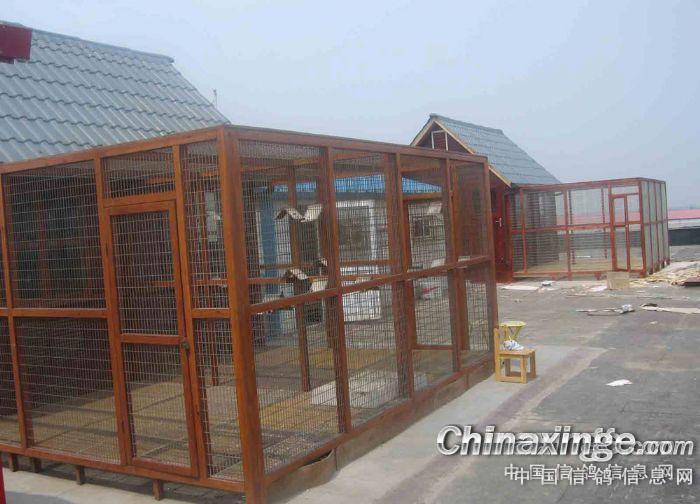 鸽舍设计图--中国信鸽信息网相册