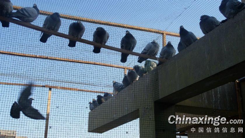 阳台鸽舍图片